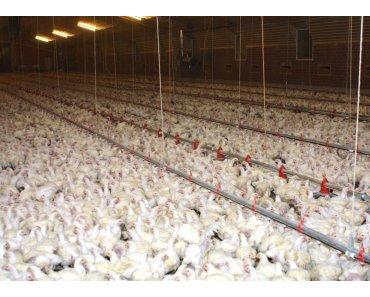 2,5 Mio. Hühner pro Woche