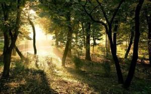 """Forstwirtschaft aus """"Das Leben"""""""