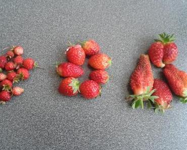 Ernte: Erdbeeren