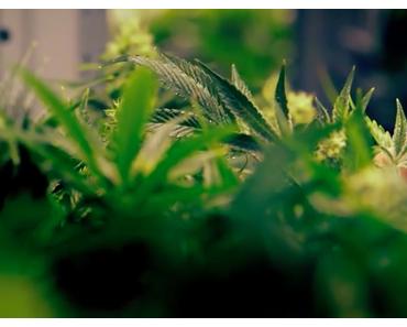 Die Evolution einer Legalisierungspolitik