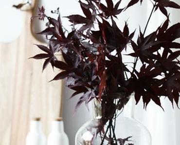 Japanischer Ahorn hinter und im Glas
