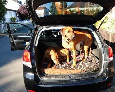 Ferienzeit ist Reisezeit – sicherer Transport für Hunde