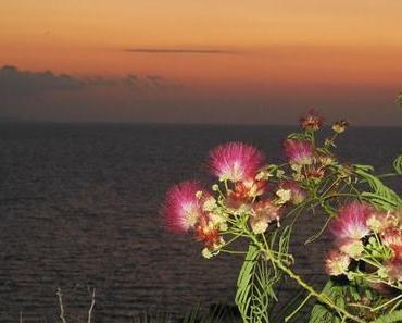 Ischia - Il Fungo, Castello Aragonese, Essen & Trinken