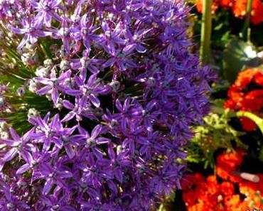 Statt Blumen – Die Coolen Blogbeiträge Woche 33/15