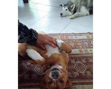Dein Freund ist auch der Freund deines Hundes