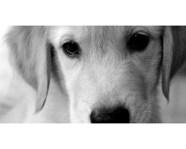 Ware Hund – Vom Umtausch nicht ausgeschlossen