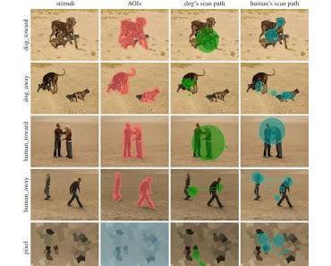 Joint Attention: Hunde beobachten soziale Interaktionen wie Menschen