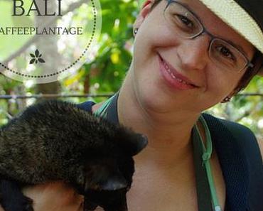 Bali und der teuerste Kaffee der Welt-Der Besuch einer Kaffeeplantage