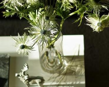 {Flowerday} Schlitzblättrige Karde (Dipsacus laciniatus) und Gräser