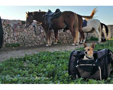 Mallorca-Urlaub: Reiten mit Hund
