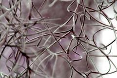 Schützen Sie Ihre Telomere