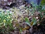 Kampf dem Buchsbaumpilz im Bauerngarten