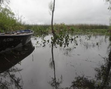 Flusskreuzfahrt auf dem Amazonas – eines der letzten Abenteuer