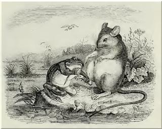 Der Frosch, die Ratte und die Weihe ⋅ Fabel von Aesop