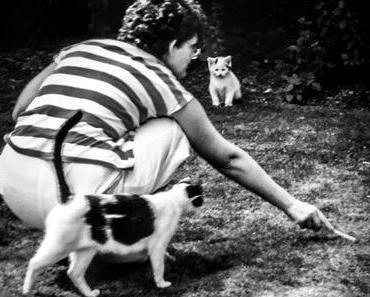Beantworte-die-Fragen-Deiner-Katze-Tag  – der amerikanische Answer Your Cat's Question Day