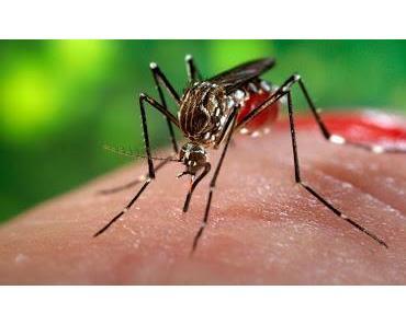 Zika-Zaka Hoi Hoi Hoi