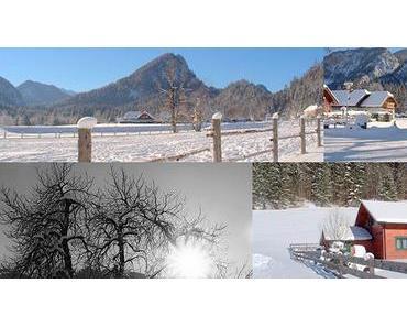 Bild der Woche: Winterimpressionen aus Greith