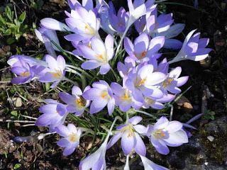 März | Dem Frühling entgegen | Herbert Fritsche