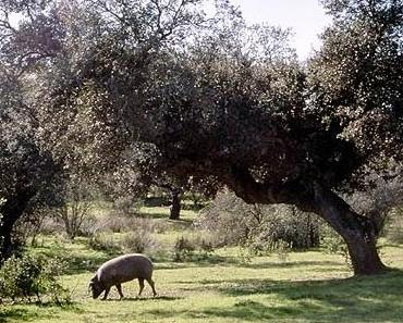 Das Schwein unter der Eiche | Hoffnung und Erwartung | Fabel von Lessing