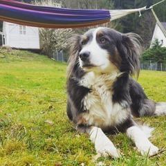 Hunde & Kinder & Erziehungsspielchen