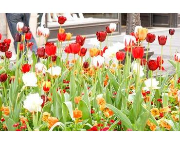 Tag der Tulpen in den USA – der amerikanische National Tulip Day