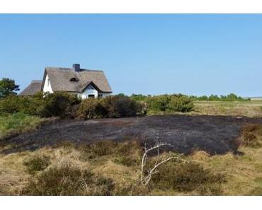 Flächenbrand in der Dünenheide