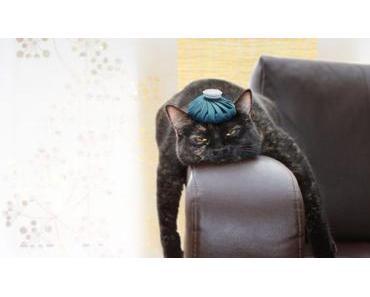 Die 10 häufigsten Katzenkrankheiten und wie du sie erkennen kannst