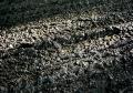 Tough Mudder Arnsberg – Streckenbegehung