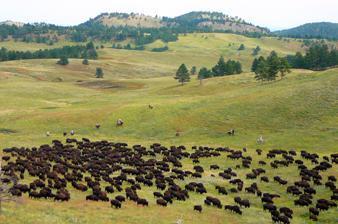 State Parks - Die kleinen Geschwister der Nationalparks