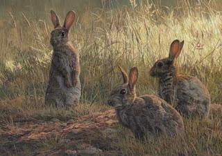 Die Kaninchen sind schuld | Fabel von James Thurber