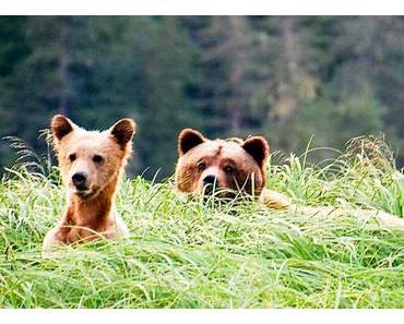 Bärengedenktag in Deutschland