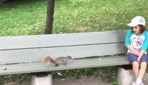 Milchzahn einem Eichhörnchen ziehen lassen
