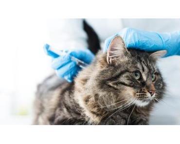 Katzenimpfung: Welche Impfungen braucht deine Katze?