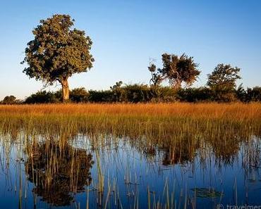Tubu Tree Camp – Zelten auf Stelzen im Okavango Delta