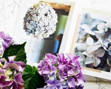 Wir ihr Hortensien perfekt trocknet und Ideen zur Deko
