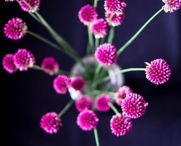 Flowers | Bildhübscher Zierlauch aus Nachbar's Garten
