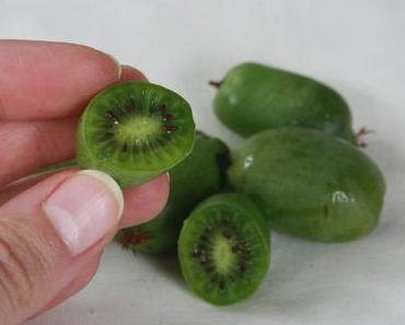 Entdeckt// Wie schmeckt eigentlich die Mini-Kiwi?