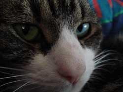 Haben Katzen sieben Leben?