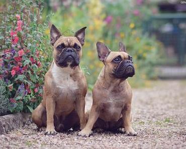 Gartenhunde