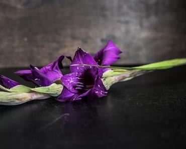 Flowers | Designer-Gladiolen in Lila