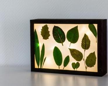 DIY Lichtbox mit Sommererinnerungen für Frosch