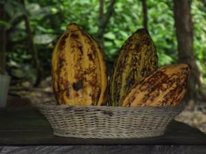 Zu Besuch beim Kakao – eine Buchvorstellung