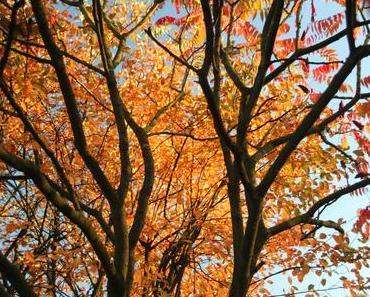 Foto: Bunte Blätter im Herbst