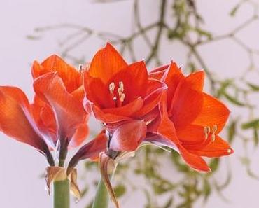 Friday-Flowerday 49/16