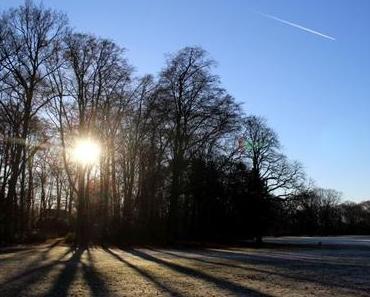 Winterlicher Stadtwald