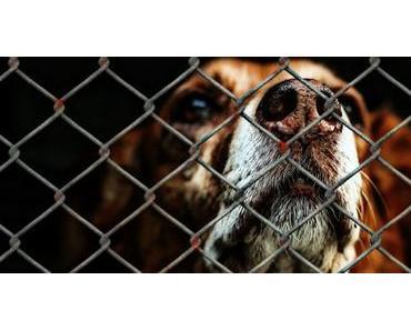 Tierschutzhunde versorgen