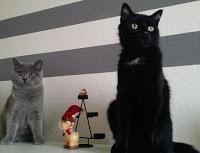 Tipps für den ruhigen Silvesterabend || Tierbloggeradventskalender Türchen 17