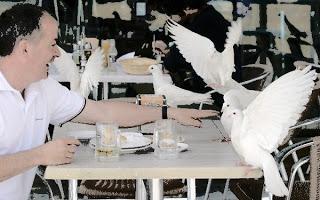 Taubendreck in Barcelona verantwortlich für Berufsunfähigkeit