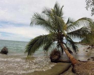 Auf der Suche nach Faultieren in Cahuita