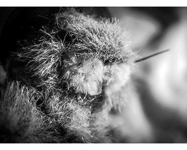 Groundhog Day – Der nordamerikanische Tag des Murmeltiers